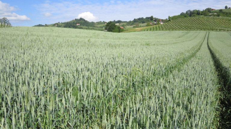Kako do višjih in bolj kakovostnih pridelkov poljščin